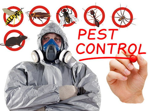 How to Get a Fabulous Pest Control Service in Norway on a Tight Budget